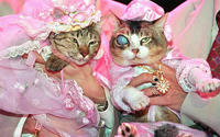 Cat Wedding is Not a Theme - It's an Event