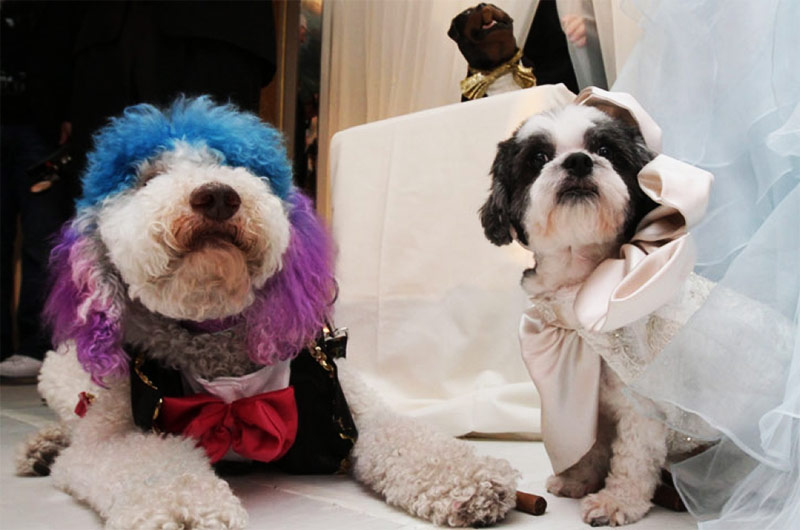 Here's the Most Expensive Dog Wedding Ever