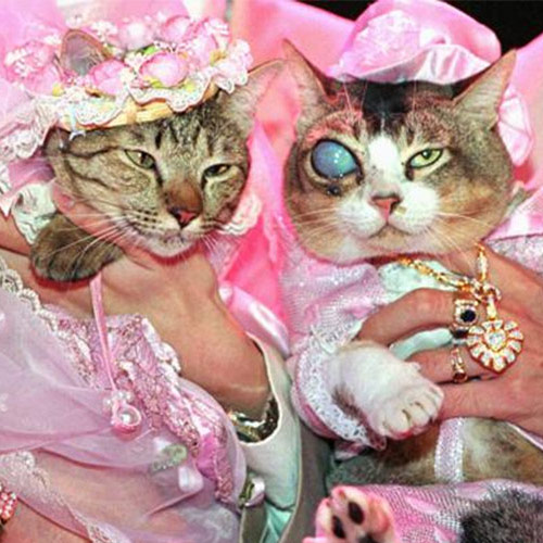 8. Most Expensive Cat Wedding