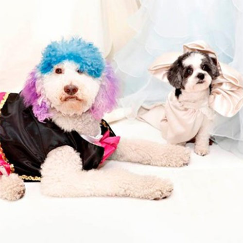 9. Most Expensive Dog Wedding